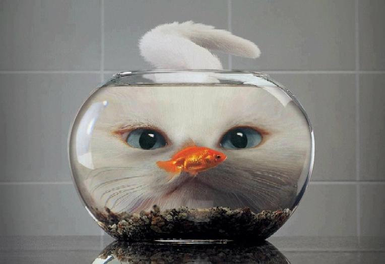 fish-n-cat1-800x549